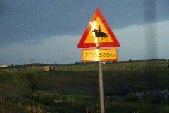 Horse Crossing Sign in Iceland