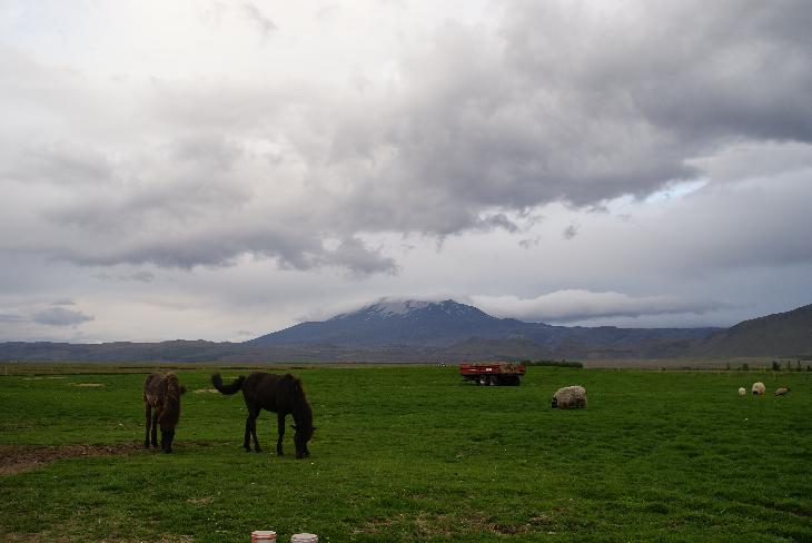 Photo of Mount Hekla Iceland with grazing animals in the foreground.