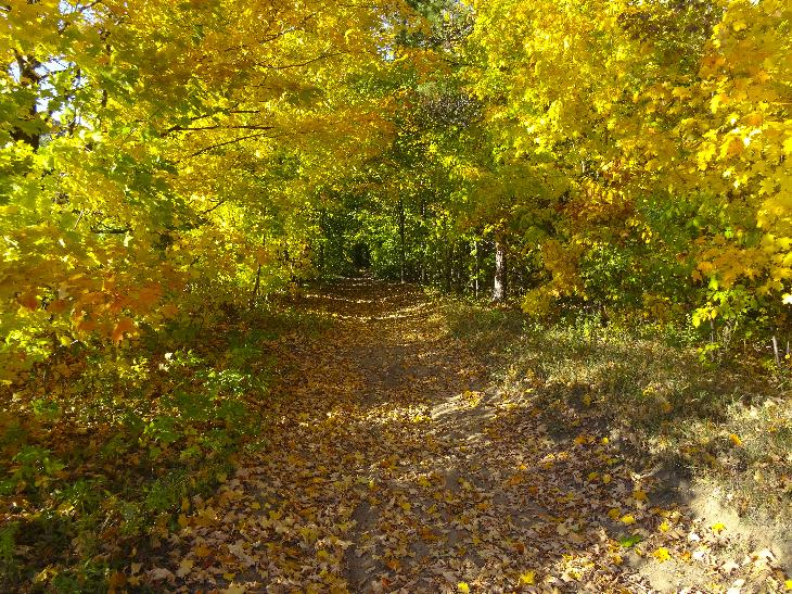 A photo taken in October 2015, in a Simcoe County Forest in the south end of Barrie Ontario.  Shows fall colours of red, orange and yellow.