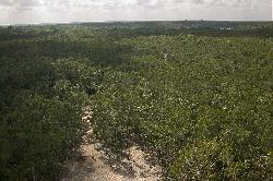 View from the top of Nohoch Mul Pyramid Coba Mexico. Pyramid located in the Mayan Ruins of Coba, Mexico.