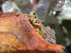 Close-up of grasshopper resting on a tree stump in the garden.