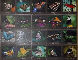 Photo of chart showing the butterflies currently habitating the Niagara Butterfly Conservatory.