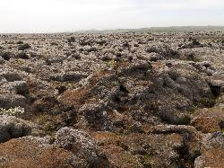 Eldhraun lava field in Iceland - ground level view