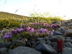 Close-up photo of new vegetation growing near glacier at Vatnajökull National Park.