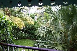View from balcony of room 613 at Sandals Halcyon Beach Resort in St. Lucia.  Trees and plants in garden area.