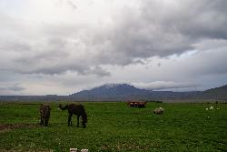 Mount Hekla scenic view with Icelandic horses.