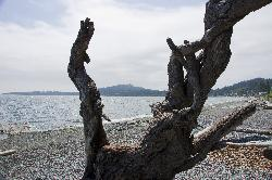 Mount Douglas can be seen in the distance of this photo at the beach of Cordova Bay near Victoria British Columbia.