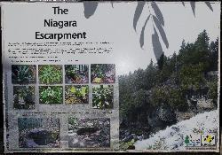 Poster at Inglis Falls information booth describing the creation of the Niagara Escarpment, as well as some of the flora in the area.  Including Bloodroot and Maidenhair Fern.