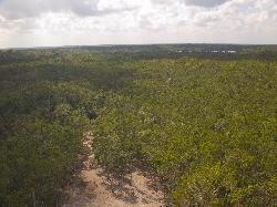 View from the Nohoch Mul Pyramid Coba Mexico.  Located in the Mayan Ruins of Coba, Mexico.