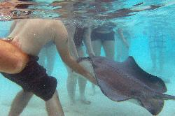 Underwater photo while at the Stingray City attraction at Cayman Islands.  While on excursion from Carnival Freedom.